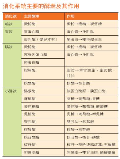 酵素 膵液 消化